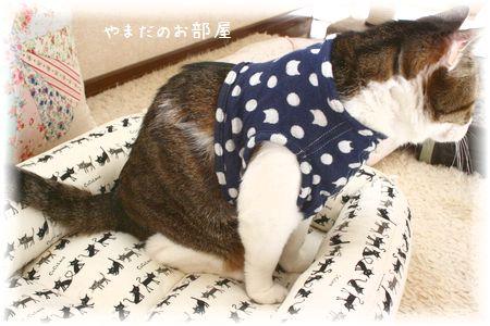 スーちゃん 新しいお洋服試着④