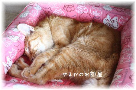2015.5.2のチャンちゃん