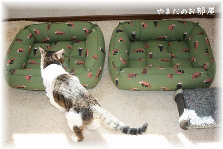 レッサーパンダの猫ベッドとスーちゃん①
