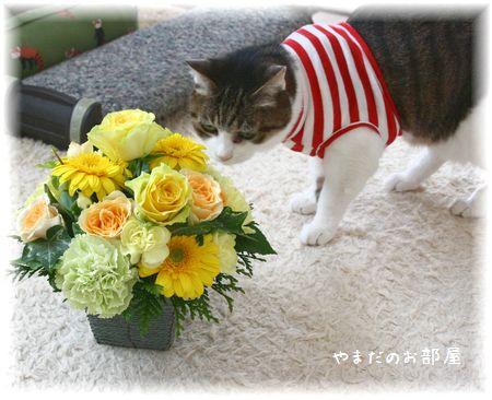 2015年みんニャのお誕生日のお花とスーちゃん