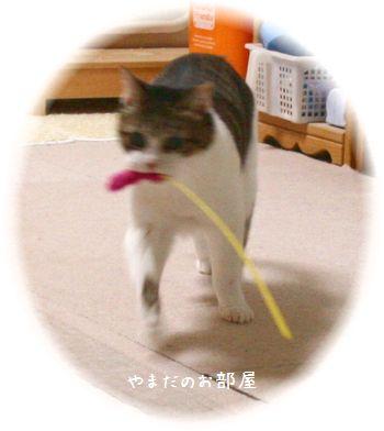 2015.1.12のスーちゃん