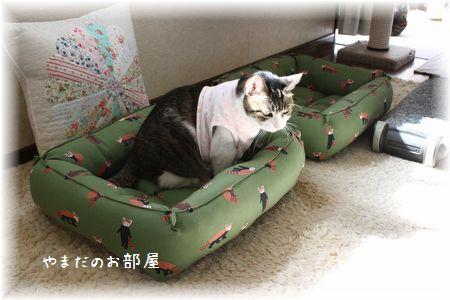 レッサーパンダの猫ベッドとスーちゃん③