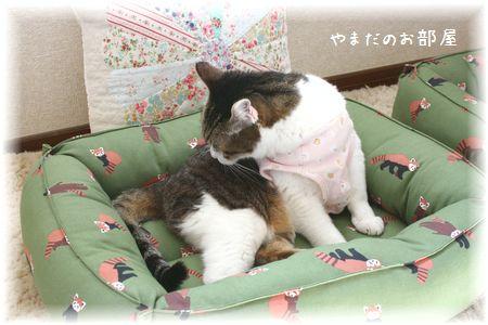 レッサーパンダの猫ベッドとスーちゃん⑤