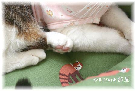レッサーパンダの猫ベッドとスーちゃん⑥