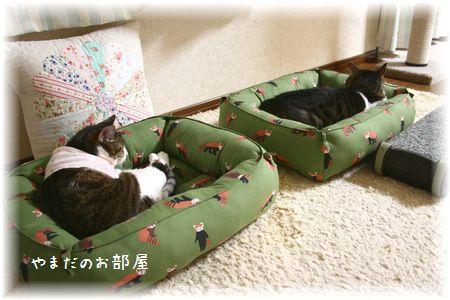 レッサーパンダの猫ベッドで2ニャン^^