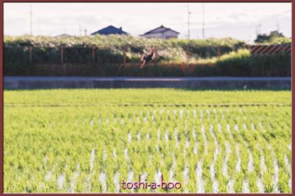 blogtsubame2.jpg