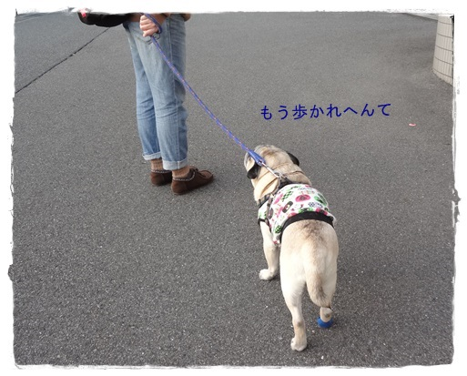 DSC03687-2.jpg