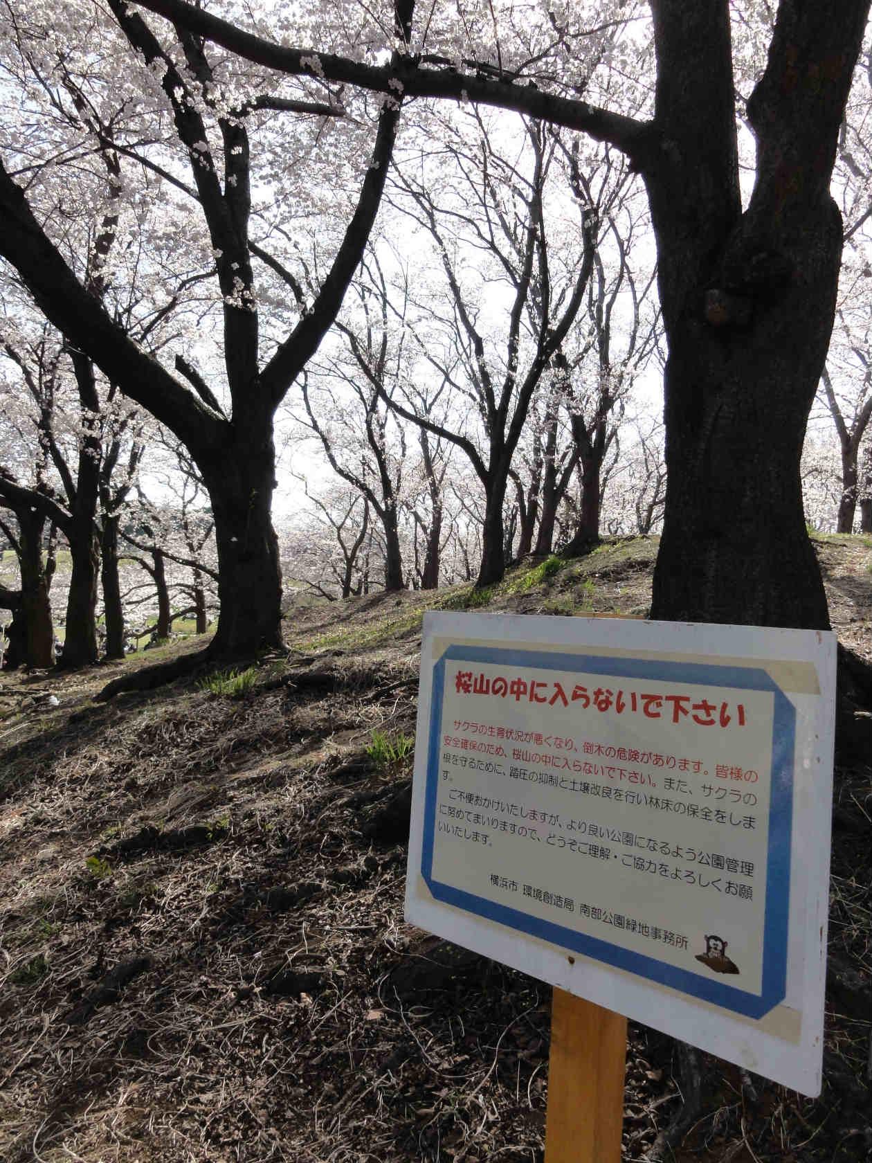 根岸森林公園4