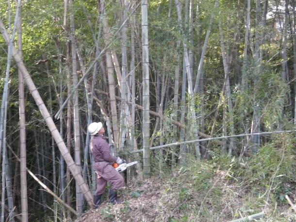 竹伐採Y氏