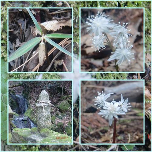 004 英彦山のお花
