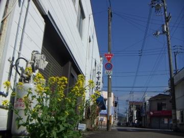 菜の花 (2)