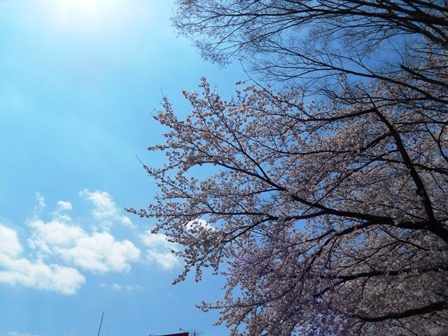 桜20150402001