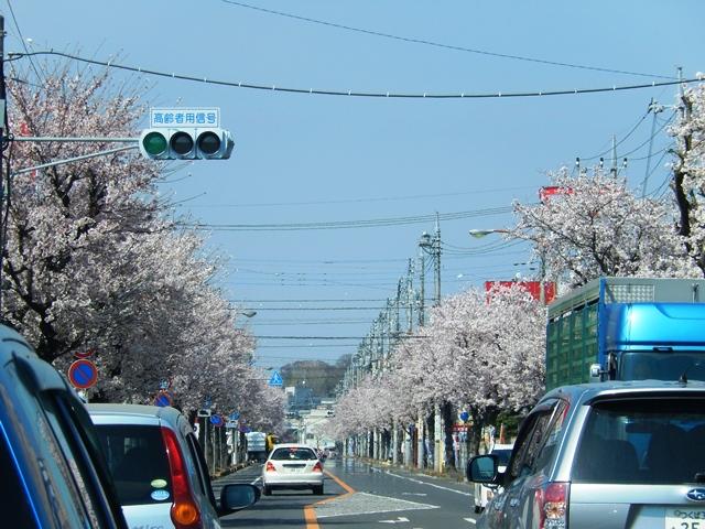 桜20150402004