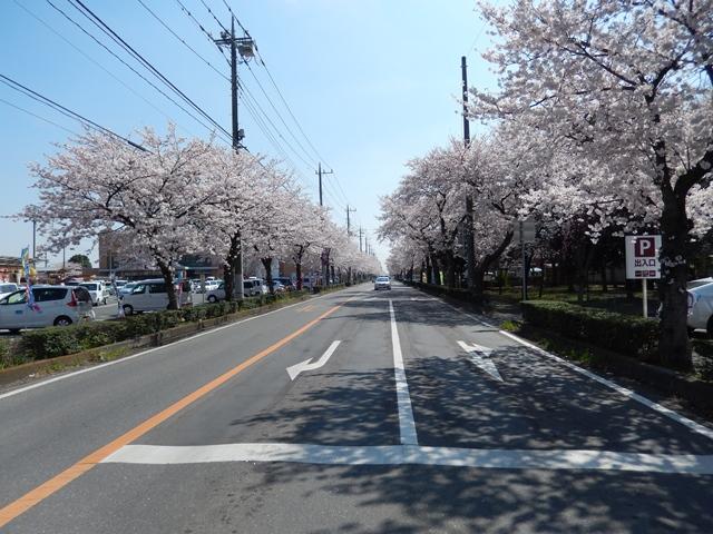 桜20150402005