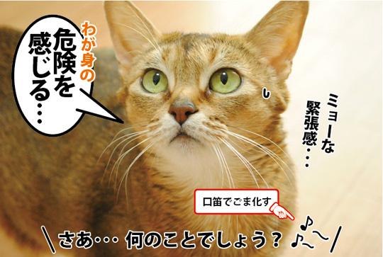 20150307_02.jpg