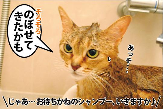 20150309_04.jpg