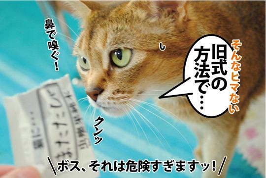 20150312_04.jpg