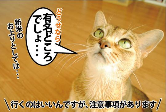 20150330_04.jpg