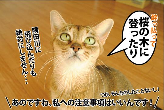 20150330_05.jpg