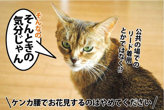 20150330_07.jpg