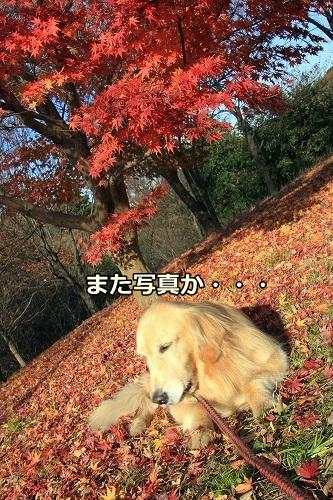 s-IMG_4837.jpg