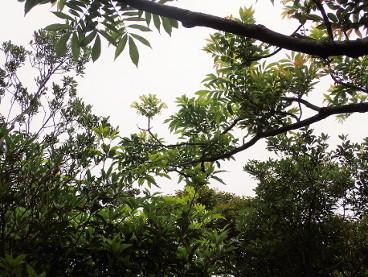 tree-awabuki0077.jpg