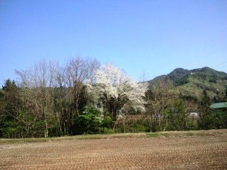 桜など150429a