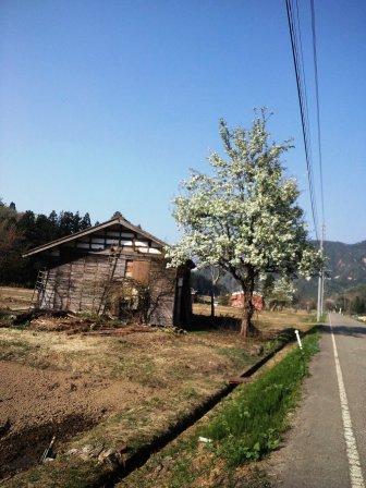 桜など150429b
