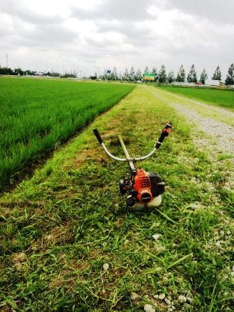 畦畔草刈り150621c