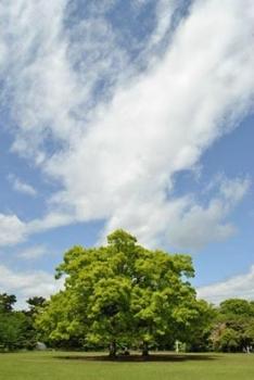 栗林公園 香川県
