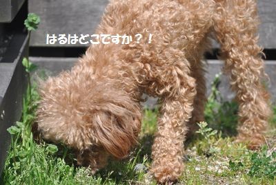 DSC_1499.jpg
