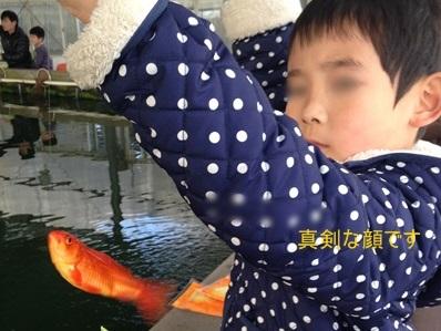 こうくん金魚つり