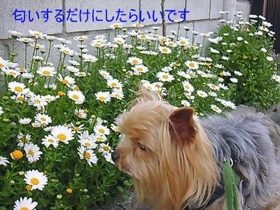 P1110057_2015040320234044c.jpg