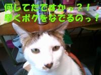06_2015042714545025e.jpg