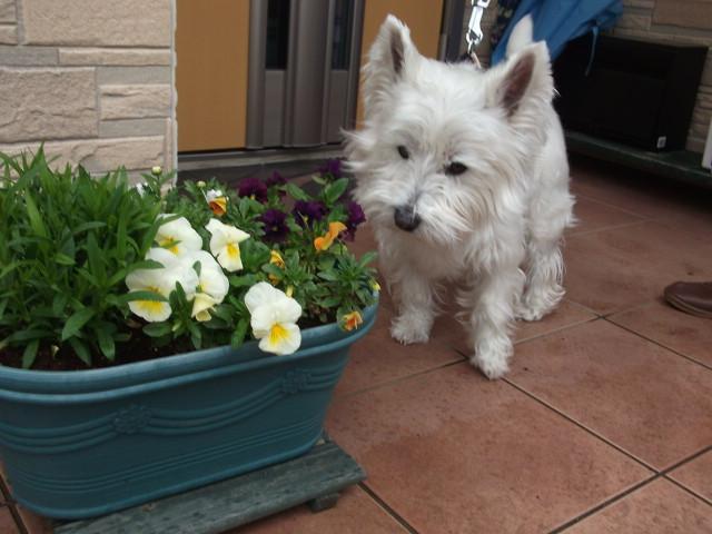 お花とにっこです