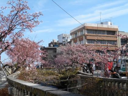 150216_桜