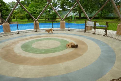 動物愛護センター