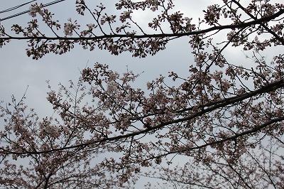 2015高松11