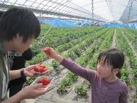 イチゴ農園にて「はい、どうぞ」