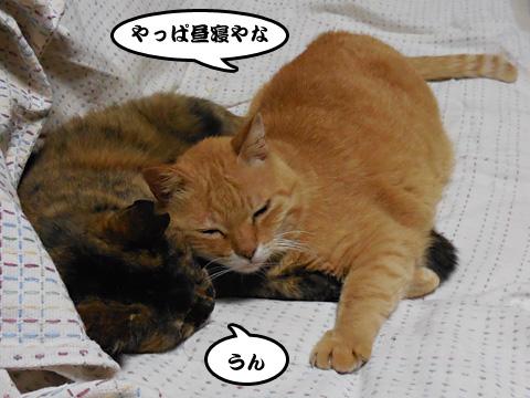 15_06_27_3.jpg