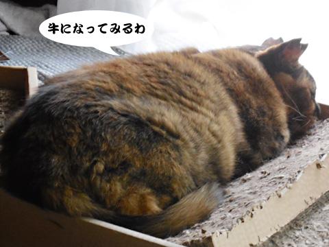 15_06_29_6.jpg