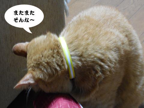 15_07_07_3.jpg