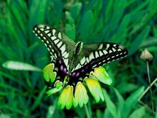 butterfly_HSVplus30.jpg