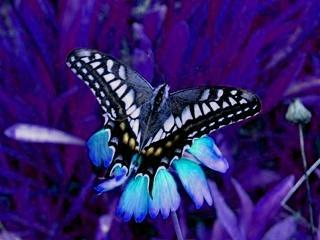 butterfly_HSVplus90.jpg