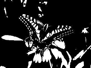 butterfly_bin.jpg