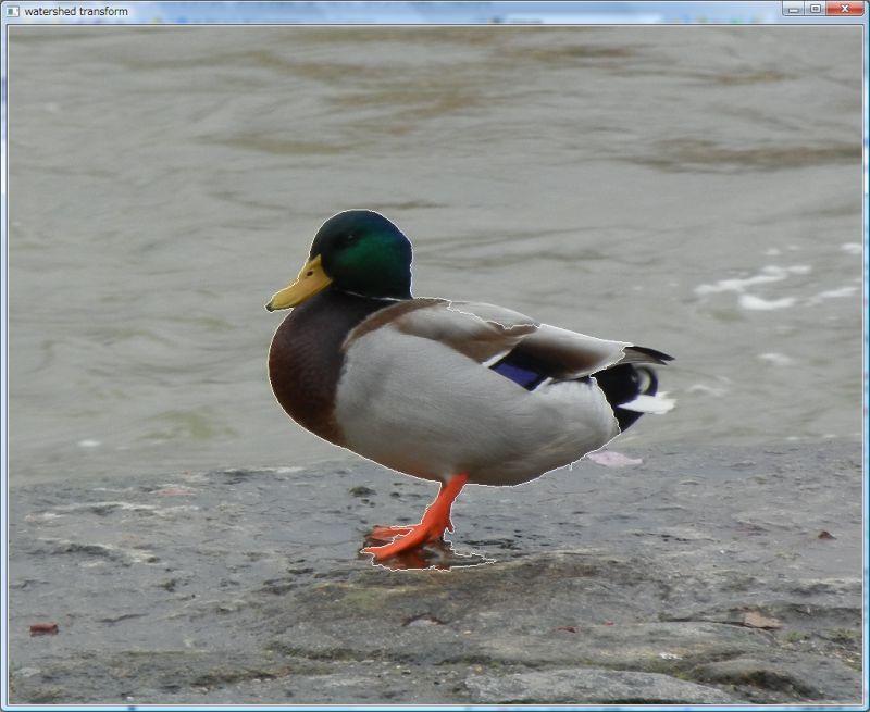 watershed_contour_Regensburg_duck_800.jpg