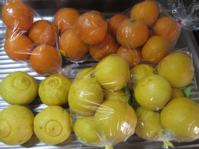 ネーブル・ブラッドオレンジ・はるか・日向夏