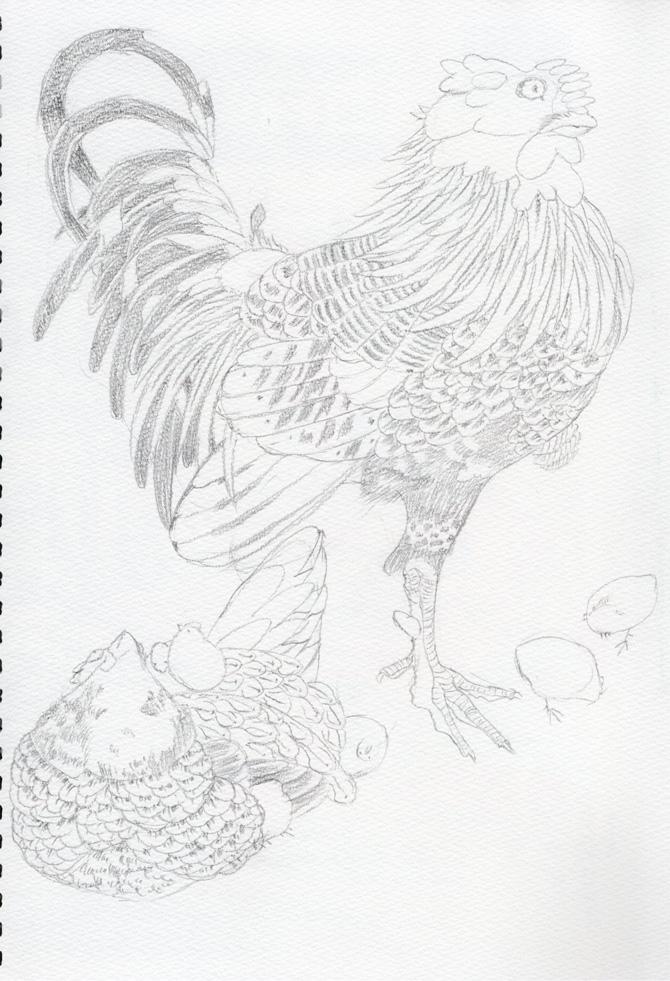 郡鶏の模写