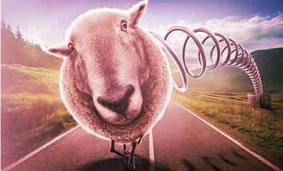 sheep9.jpg