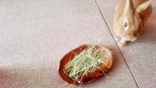 ココロノおうちの牧草
